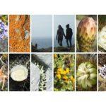 Collage aus verschiedenen Fotos